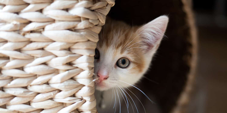 • My Pet • Your Pet's name • Το Κατοικίδιο μου • Το Όνομα του κατοικιδίου σας •