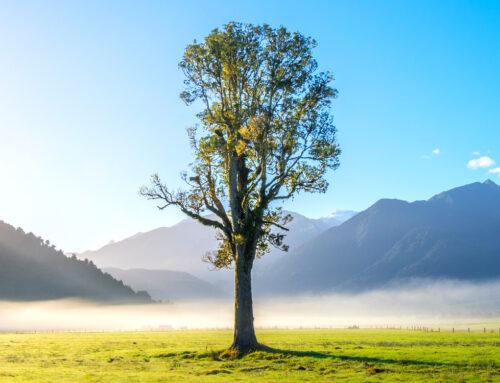 Ο ΚΟΣΜΟΣ / ΤΑΞΙΔΕΥΩ / ΧΩΡΕΣ – Νέα Ζηλανδία