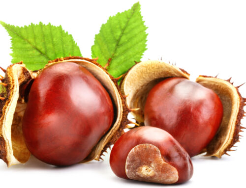 PHYSICAL HEALTH / MY HEALTHY BASKET – Gefen Organic Chestnuts